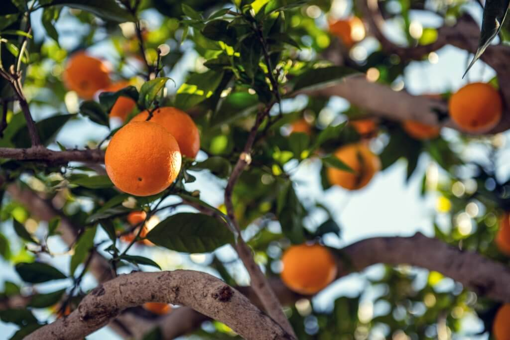 Vitamin C and E are important vitamins to incorporate into your balanced diet